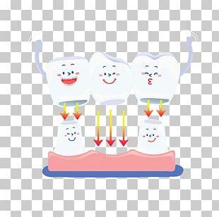 Human Tooth Euclidean PNG