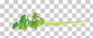 Coriander Leaves PNG