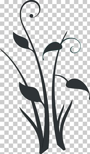 Decorative Borders Borders And Frames Plant PNG