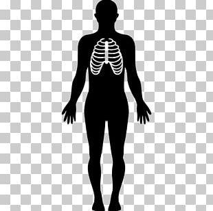 Human Body Organ Computer Icons Anatomy Homo Sapiens PNG