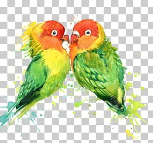 Lovebird Parrot T-shirt Watercolor Painting PNG