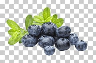 Bubble Tea Blueberry Flavor Popping Boba PNG