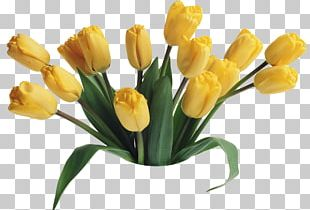 Mother's Day Tulip Flower Bouquet Happiness PNG