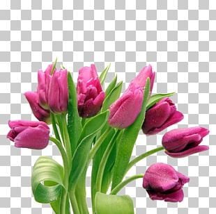 Tulip Desktop Flower Bouquet PNG