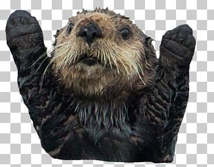 Sea Otter Sea Lion Platypus Puppy PNG
