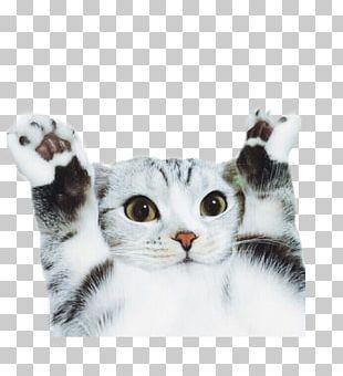 Cat Dog Pet Photography Animal PNG