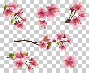 Flower Blossom PNG