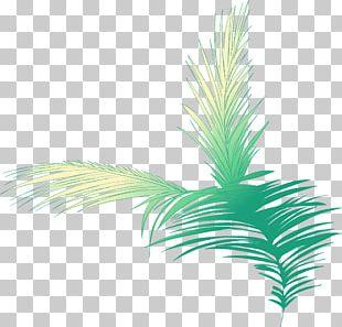 Arecaceae Woody Plant Tree Plant Stem PNG