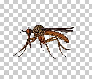 Fly Insect Marsh Mosquitoes Hematophagy PNG