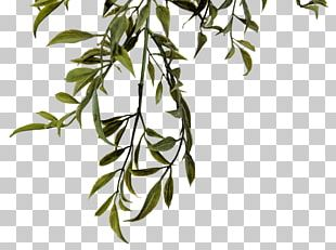 Twig Plant Stem Leaf Flower White PNG