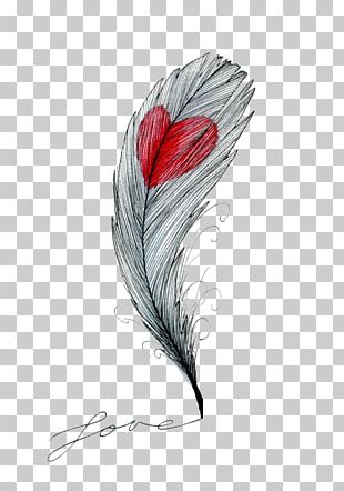 Drawing Feather Heart Sketch PNG