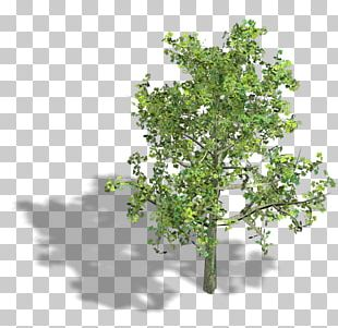 Branch Isometric Projection Axonometric Projection Tree Isometric Graphics In Video Games And Pixel Art PNG
