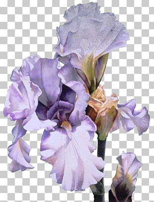Orris Root Irises Flower GIF PNG