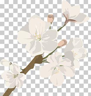 Cut Flowers Cherry Blossom Plant Stem PNG