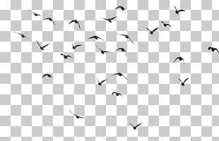 Papua New Guinea Bird PNG