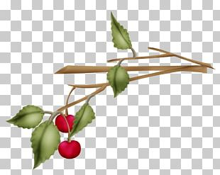 Rose Hip Twig Plant Stem Leaf PNG