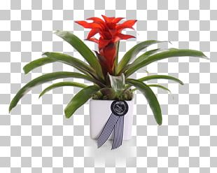 Cut Flowers Flowerpot Better Homes And Gardens Houseplant Cottage PNG