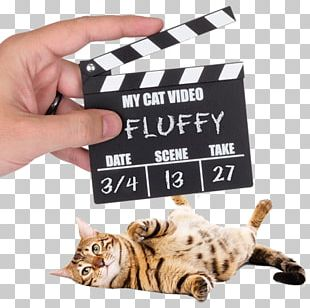 Cats And The Internet Clapperboard Video Pet Door PNG