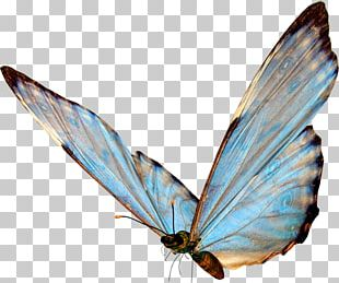 Butterfly Insect Wing PNG