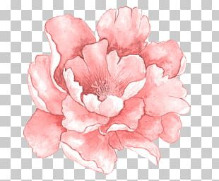 Pink Flowers Watercolor Painting PNG
