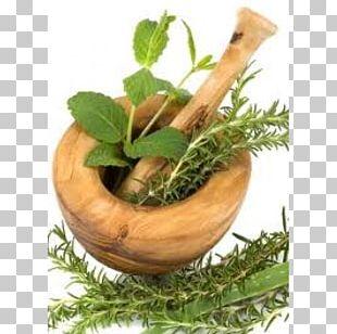 Dietary Supplement Health Thoái Hóa đốt Sống Cổ Mastic Plant PNG