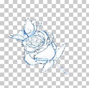 Rose Water Flower Drop PNG
