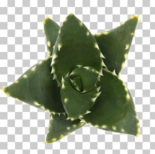 Agave INAV DBX MSCI AC WORLD SF Aloe Vera Leaf PNG