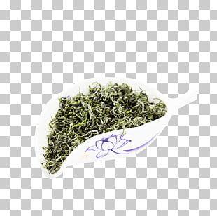 Nilgiri Tea Gyokuro PNG