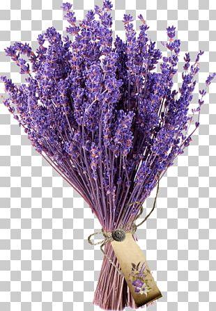 Flower Bouquet French Lavender Cut Flowers Lavender Museum PNG