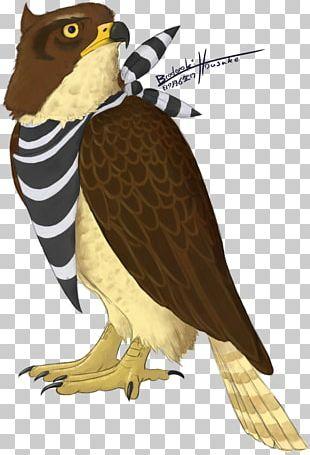 Hawk Owl Eagle Beak Feather PNG
