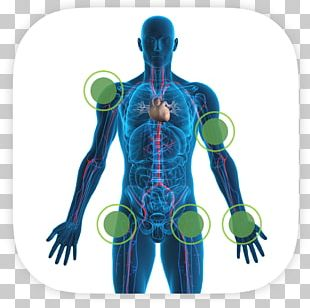 Human Body Human Skeleton Heart Human Anatomy Bone PNG