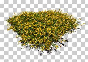 Flower Garden Tree PNG