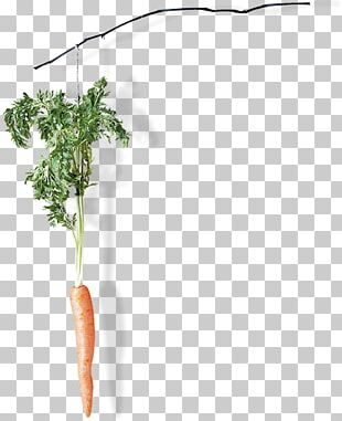 Plant Stem PNG