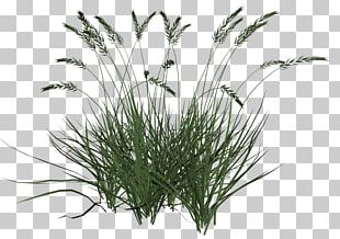 Ornamental Grass Grasses Lawn PNG