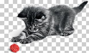 Persian Cat Norwegian Forest Cat Kitten Chartreux Dog PNG