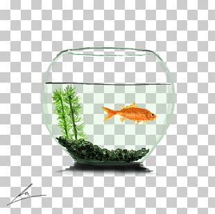 Goldfish Bowl Aquarium PNG