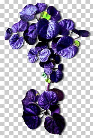 Leaf Cut Flowers Purple PNG