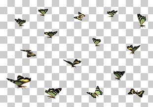 Portable Network Graphics November 0 Radio Insect PNG