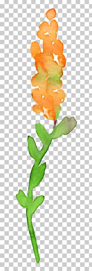 Floral Design Watercolor Painting Drawing PNG