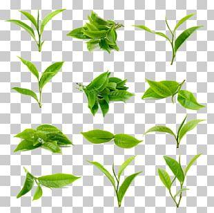 Green Tea Matcha Black Tea PNG