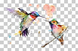 Hummingbird Watercolor Painting Drawing Art PNG
