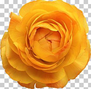 Cut Flowers Floral Design Rose Flower Bouquet PNG