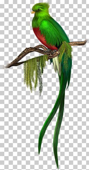 Bird Quetzal Green PNG