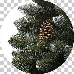 Spruce Pine Fir Christmas Ornament Christmas Tree PNG