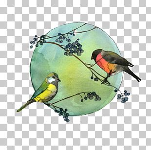 Our Winter Birds Drawing Owl Watercolor Painting PNG