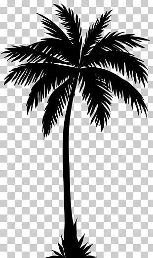 Arecaceae Silhouette Tree PNG