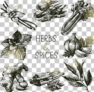 Spice Herb Drawing PNG