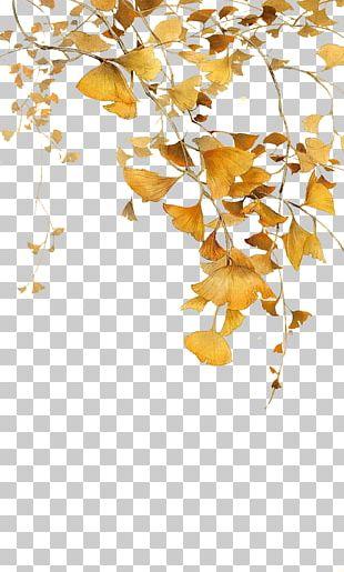 Leaf Ginkgo Biloba Icon PNG