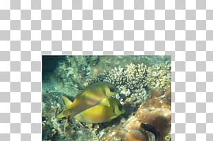 Coral Reef Fish Marine Biology Marine Invertebrates PNG