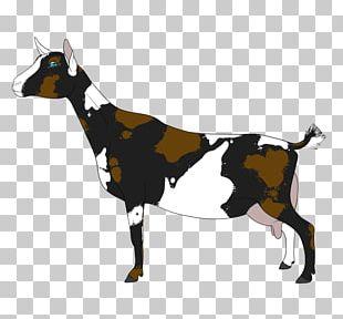 Dairy Cattle Fainting Goat Farm Black Bengal Goat PNG